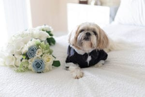 Dog with flowers on bed